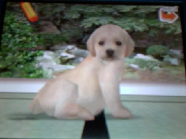 how to train your dog on nintendogs